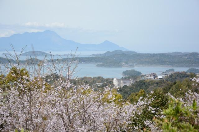 岬亭の桜便り